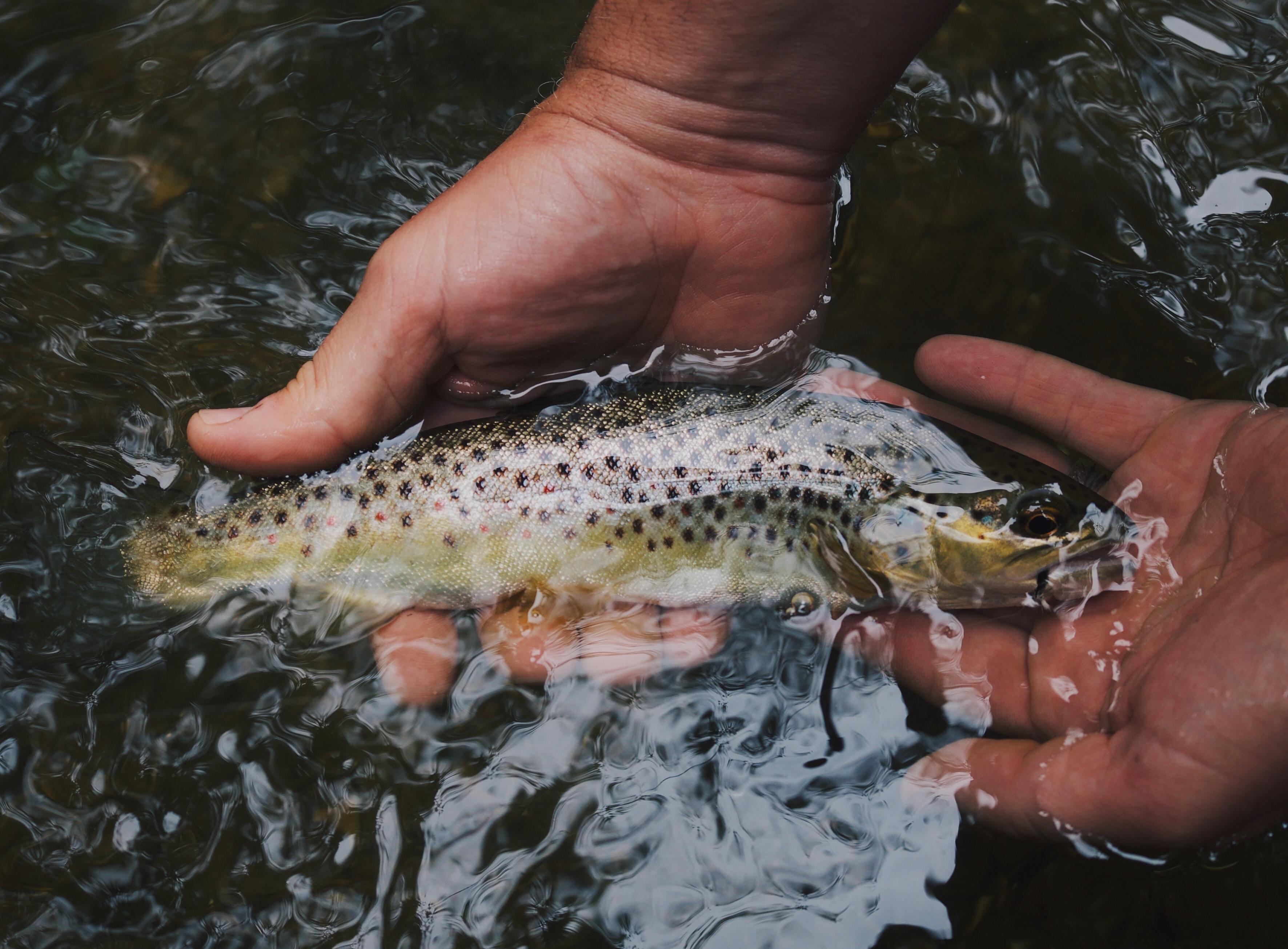 jagen und fischen 2020